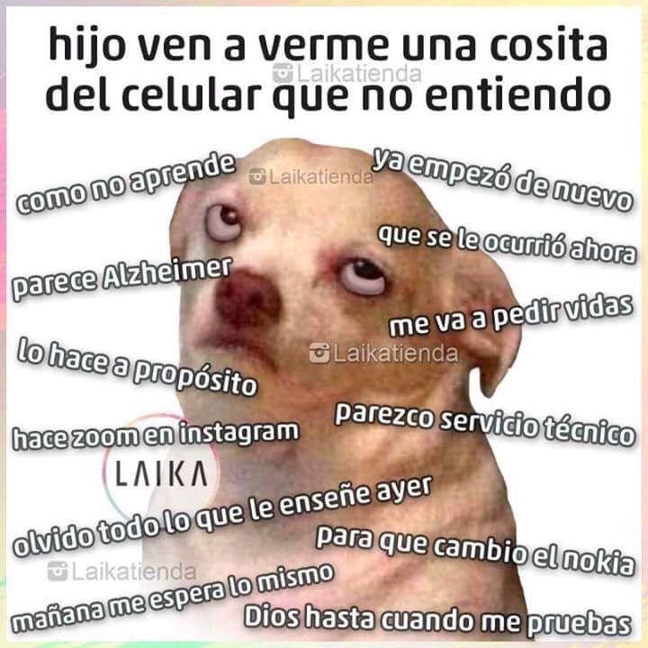 Yo todos los días #memes #perrito #tecnologia #paraquenaci