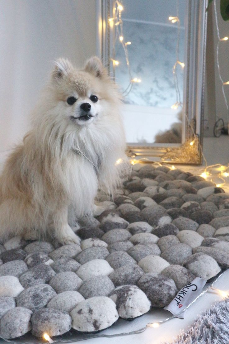What can we say: Pets love Sukhi! We even have our own hashtag for that on Instagram, #PetsLoveSukhi, as our soft, warm and comfortable rugs are also loved by the furry members of family. Here is a lovely little fella at the home of @festivus blog. #Sukhi #stonerug