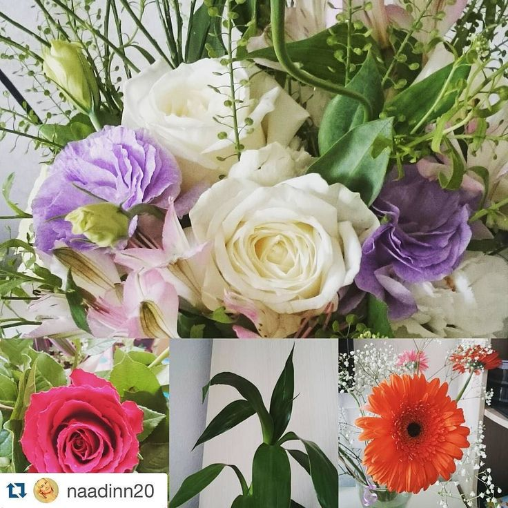 Compare Education Costs    Free Public Search No Logins Or Brokers      Check out our web page thousands of study options.  #florist #floristry #floristrystudent #flowers #flower #arts #artsy #horticulture #horticultural #horticulturist #creative #beautiful #flowerarrangement #flowerarrangements. #study #studyabroad #international #internationalstudents #internationalstudent #local #australia #australian #australianuniversity  #Repost  Credit Photography @naadinn20 with @repostapp.  С добрым…