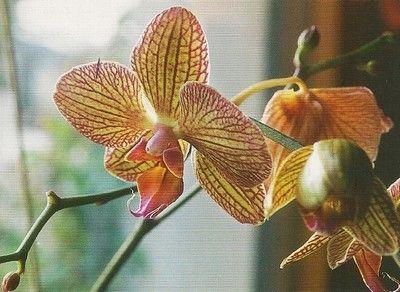 Les 25 meilleures id es de la cat gorie fleurs d 39 argile - Comment couper orchidee apres floraison ...