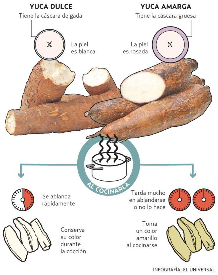 La yuca amarga o brava – como también se le conoce– es la que tiene un mayor componente tóxico. Cuando entra al organismo se transforma en ácido cianhídrico que al final se convierte en dos venenos: la acetona y el cianuro. Aprende a reconocerla y distinguirla de la yuca blanca.