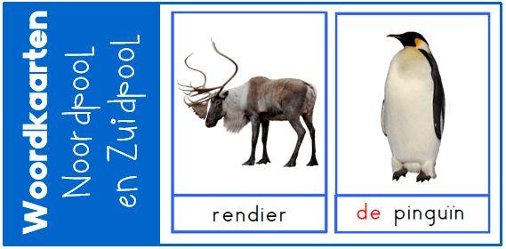 Voor het thema Noordpool en Zuidpool heb ik woordkaarten gemaakt. Ik heb realistische afbeeldingen gebruikt. Ook vind je enkele suggesties voor gebruik.