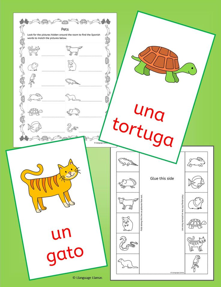 Spanish Pets activities, worksheets and games Teaching