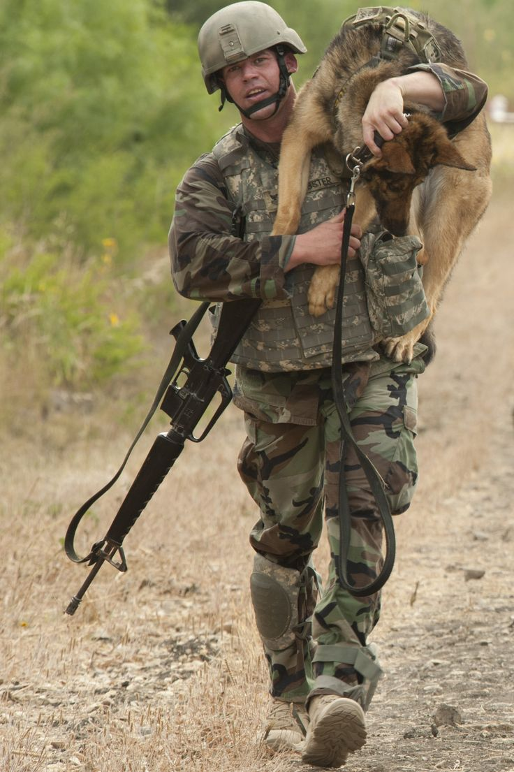 K9 Taking a Break - Google Search U.S. Navy Petty Officer 1st Class Nicholas Webster, master at arms and military working dog handler, carries Fergina, a 6-year-old patrol and explosives detection dog, as they compete during the Department of Defense Military Working Dog Trials at Joint