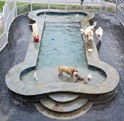 Les 25 meilleures id es de la cat gorie piscine pour chien for Piscine pour grand chien