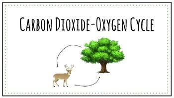 This powerpoint explains the carbon dioxide-oxygen cycle and the process of photosynthesis. The powerpoint includes definitions and explanations and colorful labeled diagrams. A student notes booklet is also included and can be copied front to back to use in an interactive notebook.