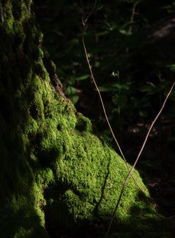 Moha, kő, fa kompozíció a Mártából.  Nature & lights from Mátra mountains & forests, Hungary #nature #photography #tree #trees #forest #sunlight #lights