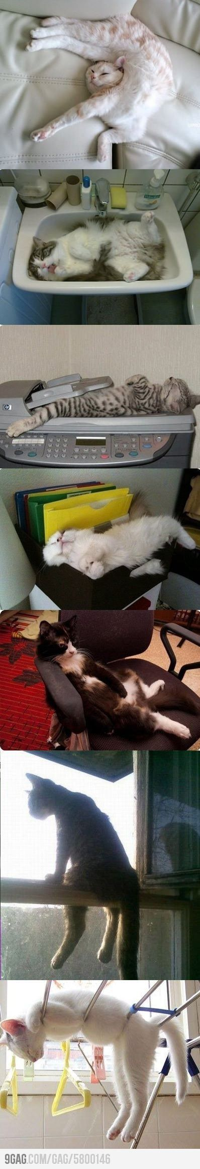 Cats...if only i could sleep like that!