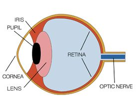 Best 25 diagram of the eye ideas on pinterest everyday diagram of the human eye and how it sees color ccuart Gallery