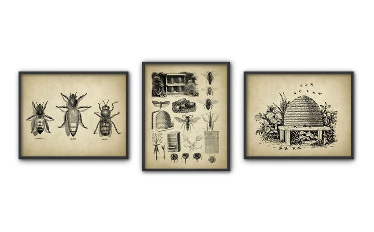 Vintage Beekeeping Print Set Of 3 - Queen Bee - Worker Bee - Drone Bee - Honey Bee - Beehive - Beekeeping - Bee Illustration - Melittology by QuantumPrints on Etsy https://www.etsy.com/listing/268210027/vintage-beekeeping-print-set-of-3-queen