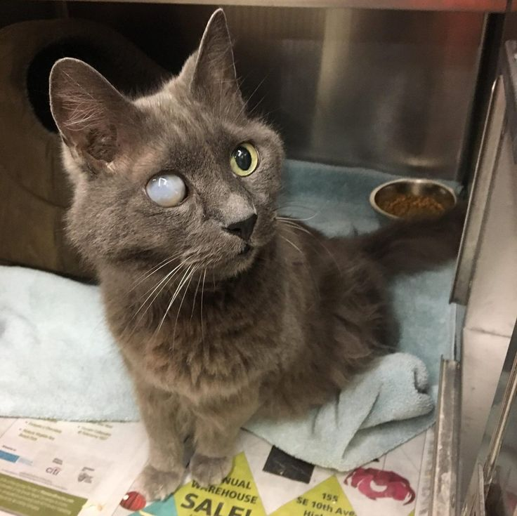 "Jaime was 18 years old and blind in one eye when he was surrendered by his previous owner to a city shelter, where his fate became uncertain.He was terrified when he arrived at the facility and didn't want to stay there. ""He just wants to be back in a home again,"" Tonis Kitten Rescue said.         T..."