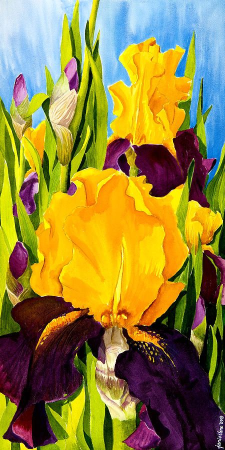 Supreme Sultan Iris Painting by Janis Grau - Supreme Sultan Iris Fine Art Prints and Posters for Sale