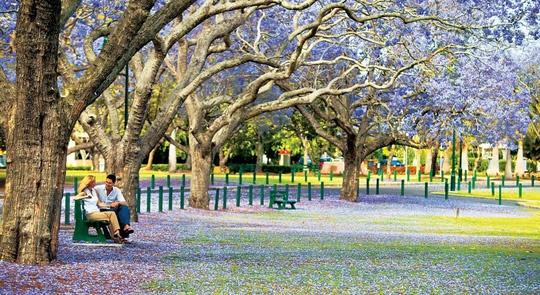 ✎ Khung cảnh New Farm – Không thể lãng mạn hơn ___________________ ✎ Cẩm nang du lịch Brisbane, Úc  http://www.ivivu.com/blog/2013/04/cam-nang-du-lich-brisbane-uc/
