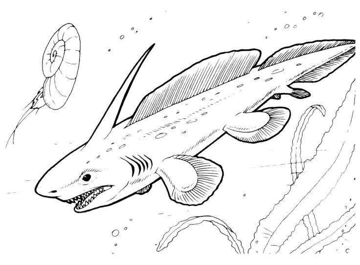 13 best dinosauri disegni da colorare images on pinterest for Disegni da colorare dinosauri