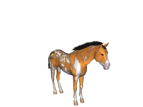 [Horse Game: Blossom the level 93 Appaloosa Mare]