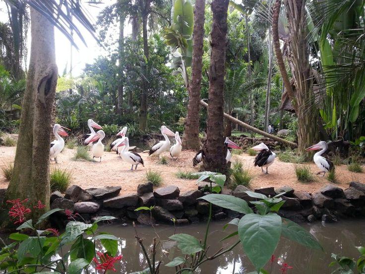 Bali Bird Park, Bali, Indonesia