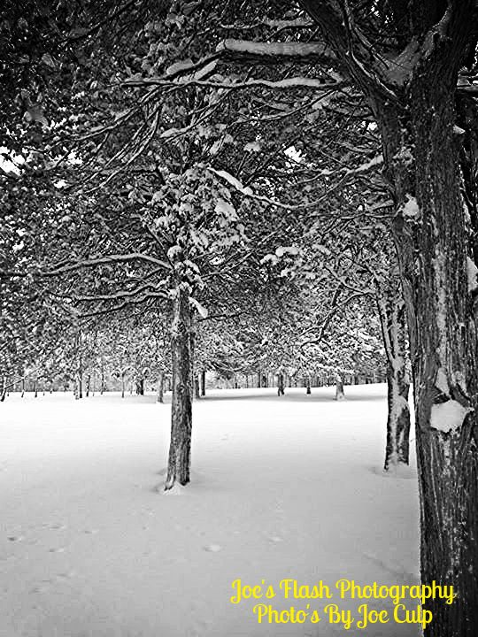 Tree's outside Loyalist College parrott Centre enduring all that snow as winter snow blows outside the College Belleville Ontario