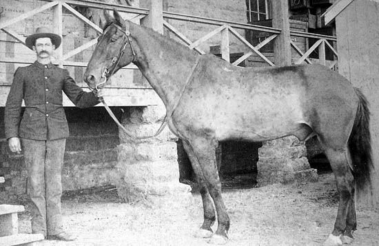 Capt. Keogh's horse Camanche, survivor of the Battle of the Little Bighorn