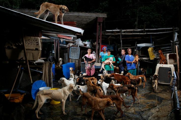 (L-R) Maria Silva, Milena Cortes, Maria Arteaga, Jackeline Bastidas and Gissy Abello pose for a picture at the Famproa dogs shelter where they work, in Los Teques, Venezuela, August 25, 2016. Venezuelans struggling to feed their families let alone pets amid an unprecedented economic crisis are increasingly dumping scrawny animals in streets, parks and makeshift shelters. REUTERS/Carlos Garcia Rawlins