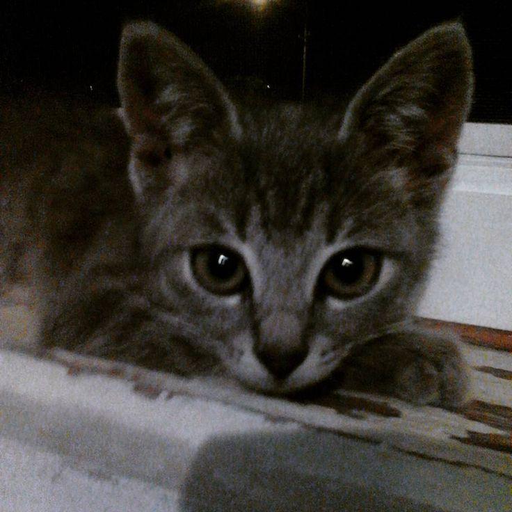 """""""Those eyes #cat #kitten #kitty #eyes #little #cute #cutest"""""""