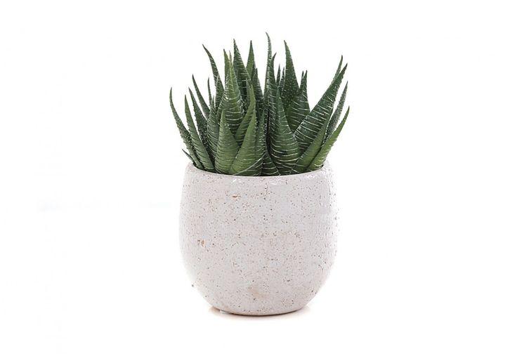 Aloe Pick Mini Tub | Super A-Mart #superamartpin2win Superamartpin2win