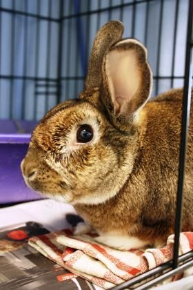 Adopt Boo Boo On Animal Rescue Adoption Humane Society