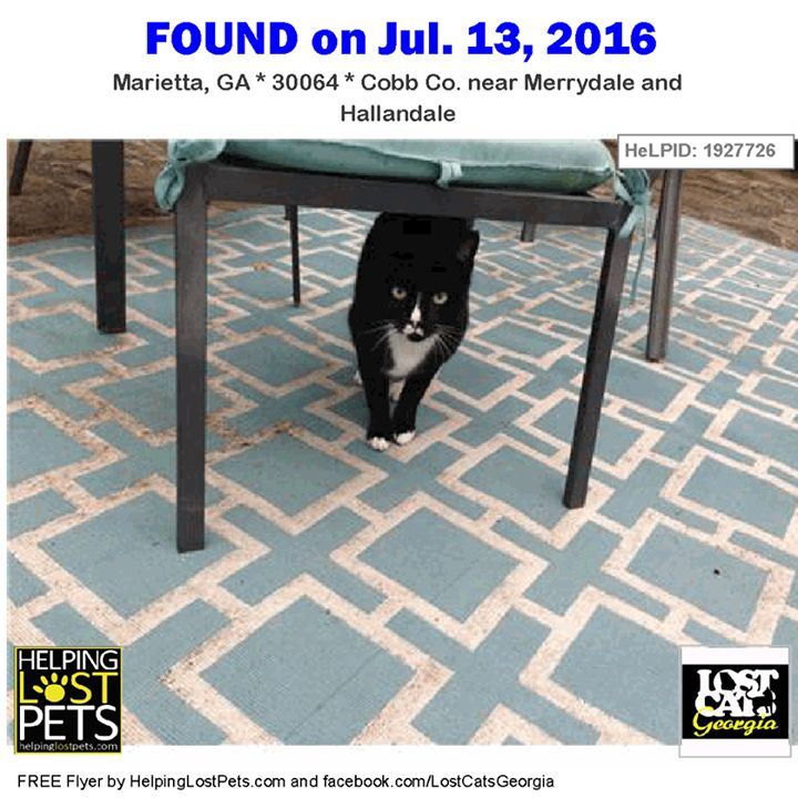 Found Cat - Marietta GA - Jul.13 2016 Closest Intersection: Merrydale and Hallandale County: Cobb  Do you know this Cat? #Marietta (Merrydale & Hallandale)  #GA 30064 #Cobb Co.  #Cat 07-13-2016! Male #Domestic Short Hair Black / White/  Tuxedo male with faded blue collar showed up in my back yard last summer.  Up until about last week he would not let me get close enough for pictures. Now he lets me pet him but is still fearful.  I feed him twice a day and he stays mostly in my back yard…