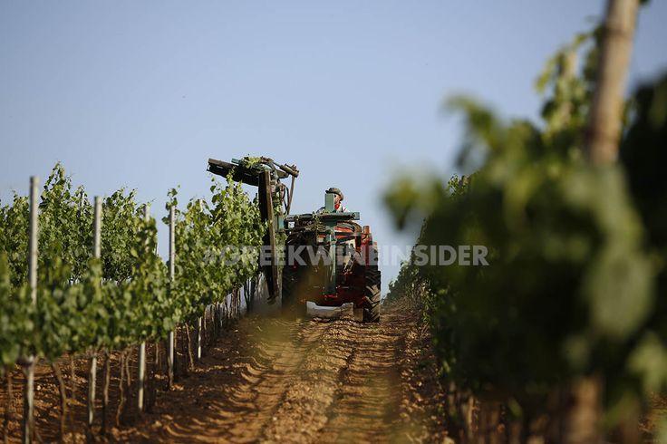 Ktima Tselepos Vineyards, Mantinia, Peloponnese Greece