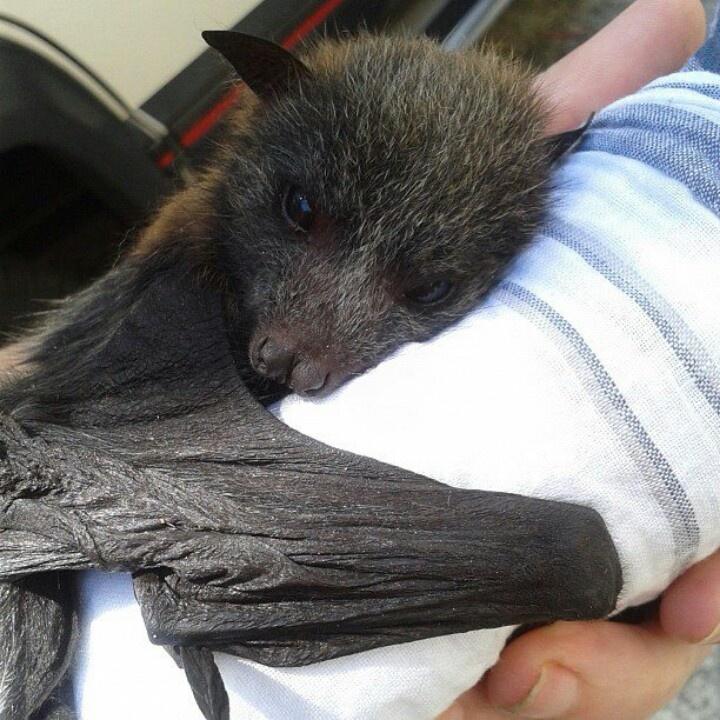 Flying fox cuddles | holdy baby