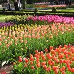 Hermoso jardín de flores Fondos de alta definición
