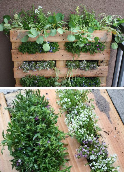 This is the most amazing idea! Great for a rental property or an appartment!! Herbs...yep would have to be full of herbs!