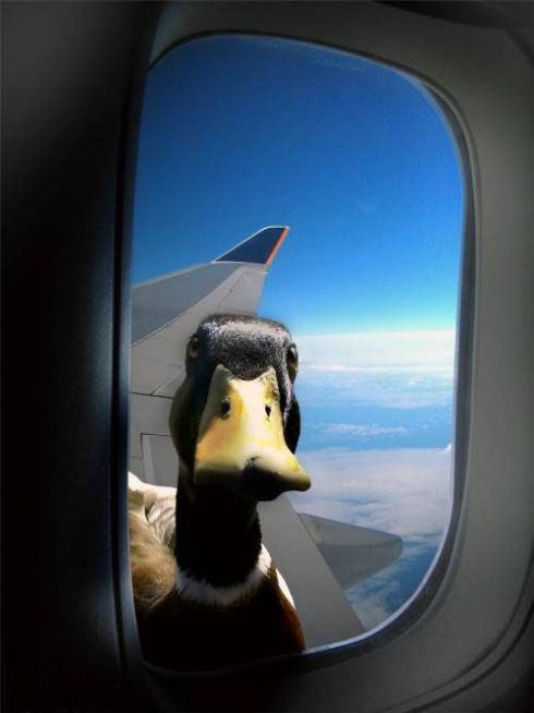 Excuse me, is this the flight going to New York? My GPS is out of the battery and I didn't know which way to go.
