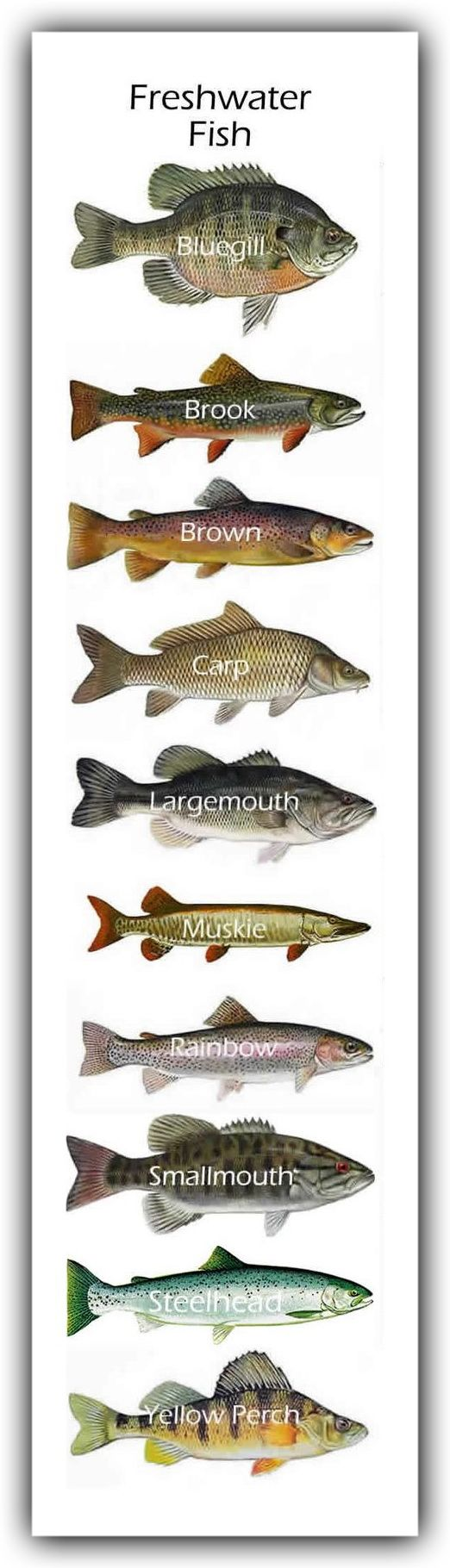 Freshwater fish jigsaw puzzles - Freshwater Fish
