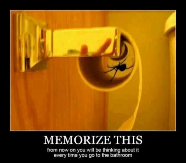 OMG!! That's so wrong!!! I hate spiders!!