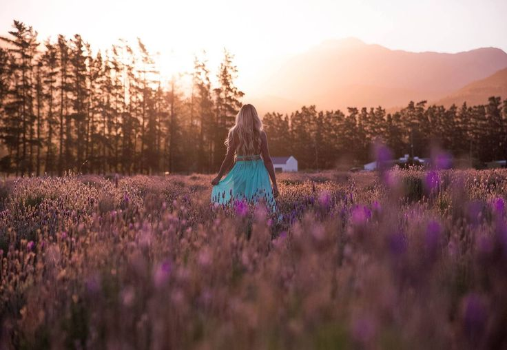Go to the Lavender Farm in Franschhoek