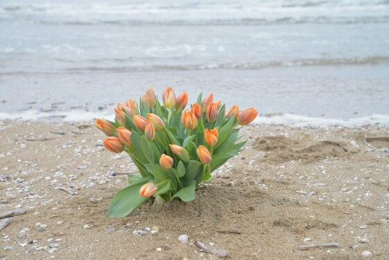 Voorjaar tulpenboeket op het strand