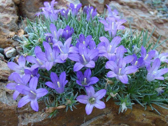 16 Best Zone 5 Xeriscape Plants Images On Pinterest
