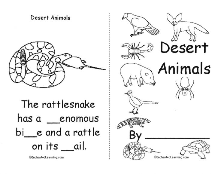 Fdaaeb C C F Aa C additionally Food Web moreover A C F C Cffbcffe De E together with  on desert animal rattlesnake worksheets for first grade