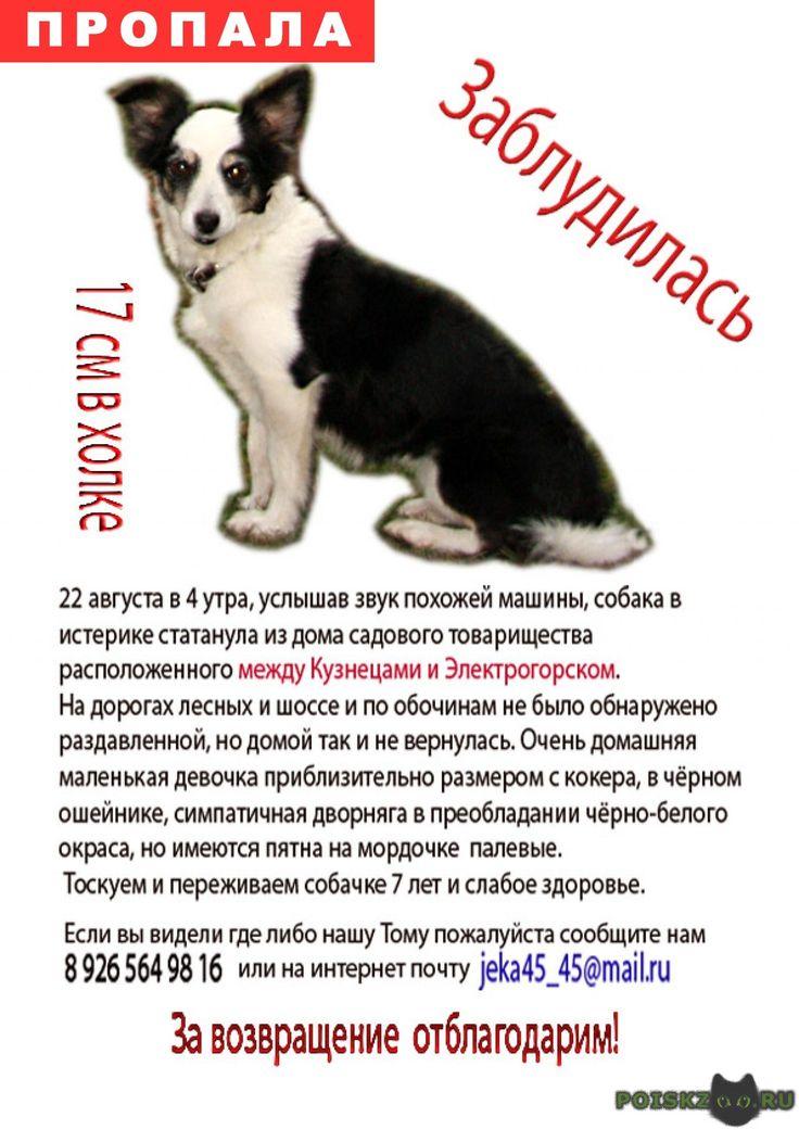 Пропала собака г.Электрогорск http://poiskzoo.ru/board/read29308.html  POISKZOO.RU/29308 .. августа в .. утра, услышав звук похожей машины, собака в истерике статанула из дома садового товарищества расположенного между Кузнецами и Электрогорском. На дорогах лесных и шоссе и по обочинам не было обнаружено раздавленной, но домой так и не вернулась. Очень домашняя маленькая девочка, чуть больше кошки чуть меньше кокера, симпатичная дворняга в преобладании чёрно-белого окраса но имеются пятна на…