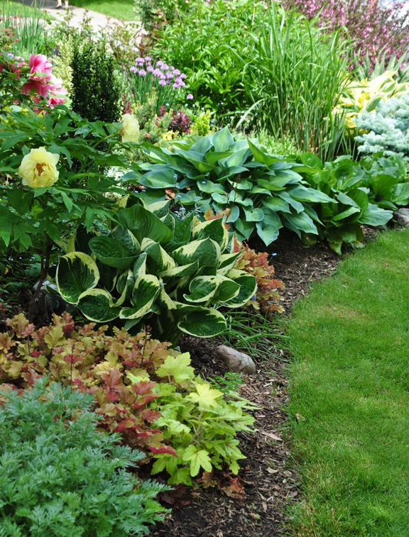 A lovely shade garden of Hostas and Coral Bells.