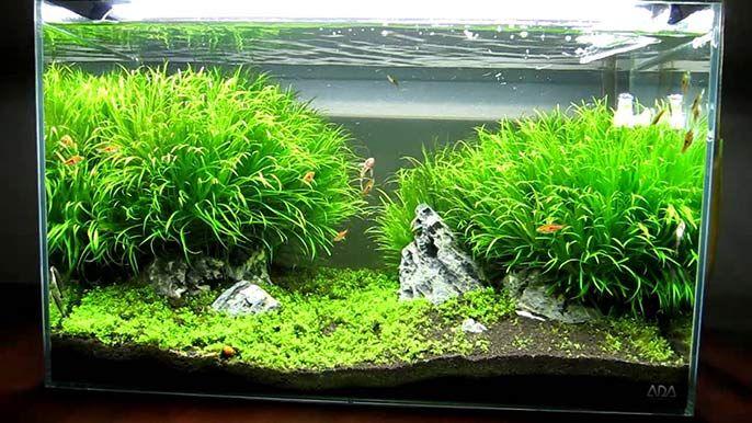 Best aquarium lighting for beginners