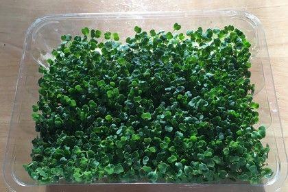 Chiasprossen aus Eigenanbau als Salat mit Rucola und Eisbergsalat (Rezept mit Bild) | Chefkoch.de