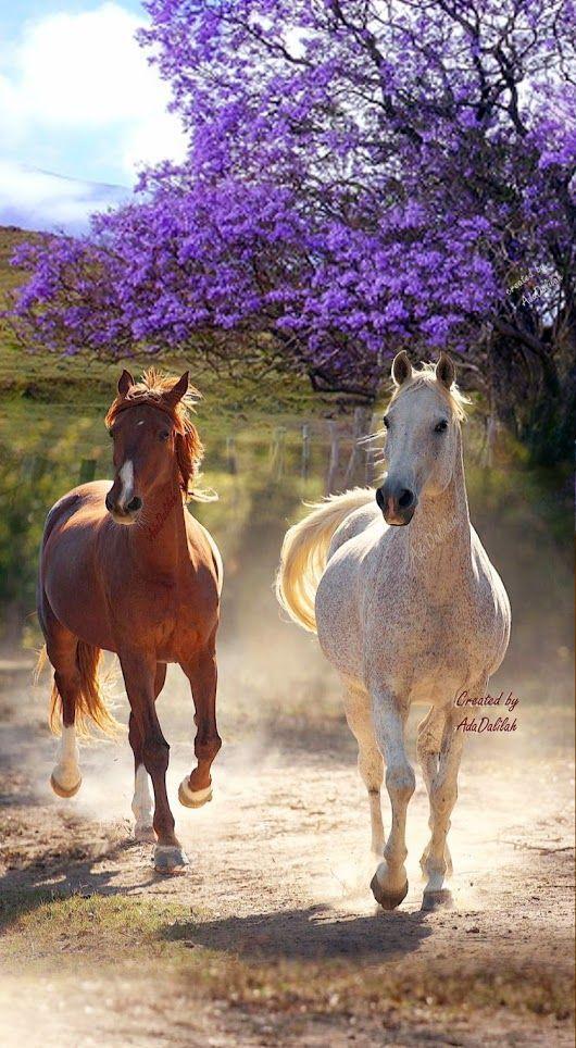 Nicht für alles etwas: Bauernhaus   – Pferde – Sweet Horses