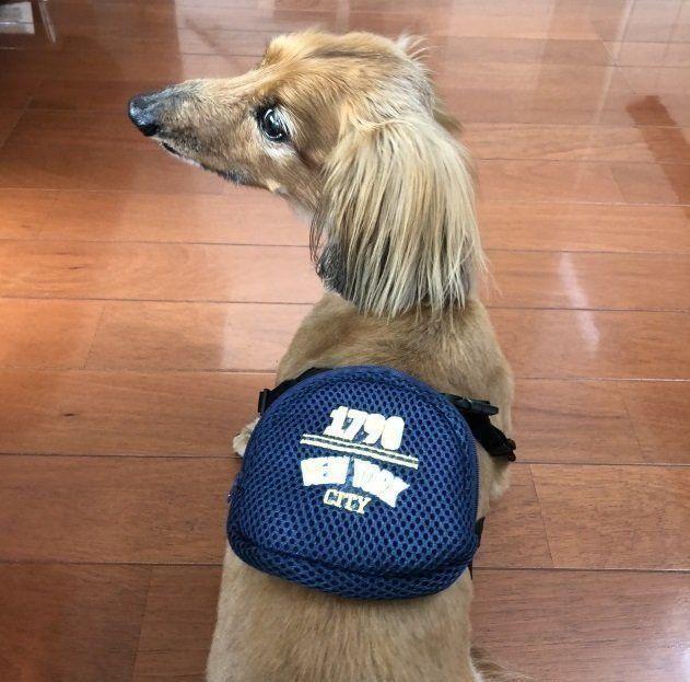 ちょっとしたオシャレに 3coinsの犬用リュック 体験レポート いぬのきもちweb Magazine 犬 ペット リュック 犬のセーター