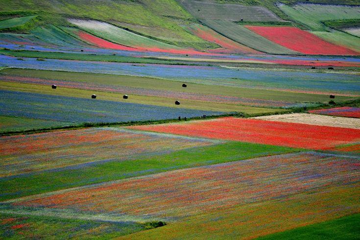 Pola kwiatów w Castelluccio