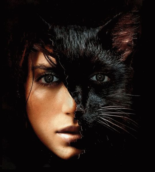 Каждая женщина –кошка... Что нужно домашней кошке? - Любви и ласки немножко…