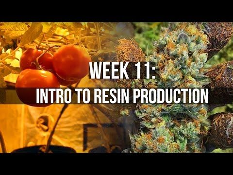 Complete Hydro Grow Tent Kit System Week 11 Uvb Intro 400 x 300