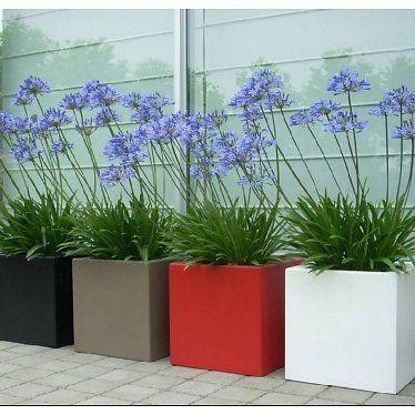 Buxus Polyester Plantenbak