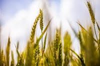 Best Jobs Point: Punjab Agriculture Department