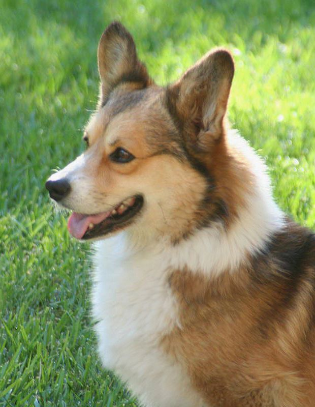 Dogs To Adopt Gainesville Fl